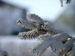 Tannenzweig Schnee