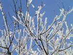 Frost auf Zweigen