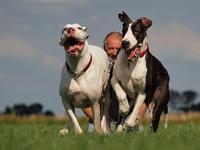 Doggen
