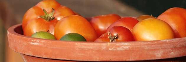 Tomaten Stilleben