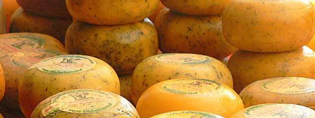 Grundsubstanz des Käseigels