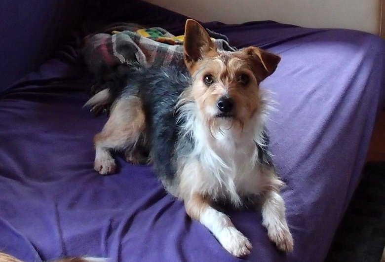 Chico, Hund aus Spanien