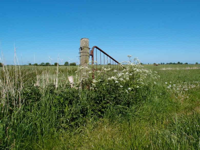 Feldtor im Weener Moor
