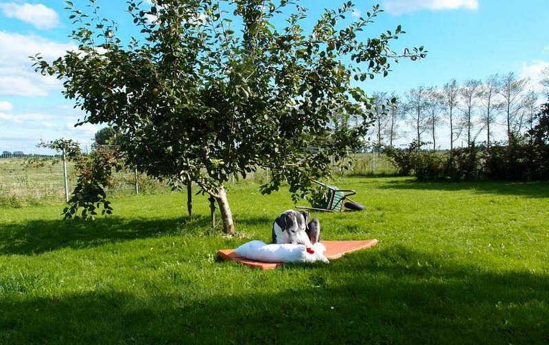 Lilli-Apfelbaum