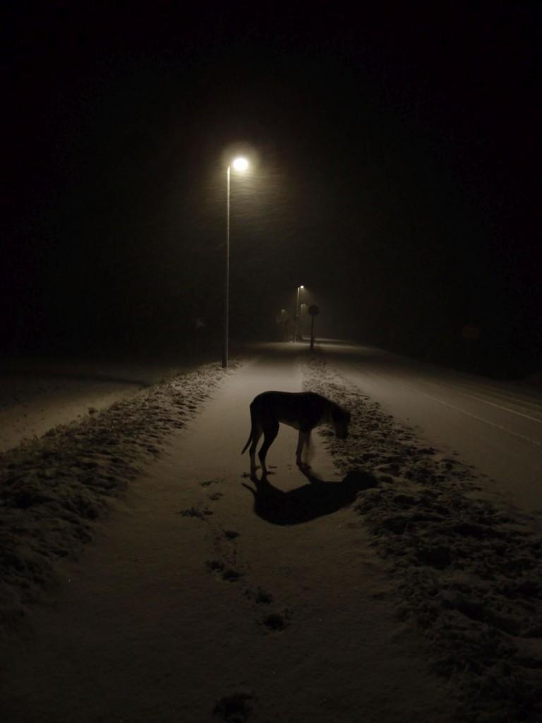 Hund Schnee
