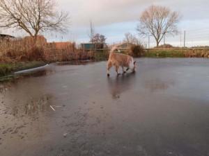 zugefrorener Teich mit Hund