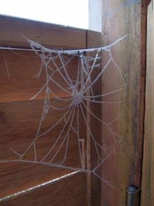 frostige Spinnweben