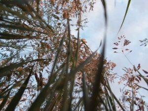 Blick durchs Gras