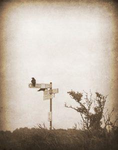 Krähen auf dem Schild