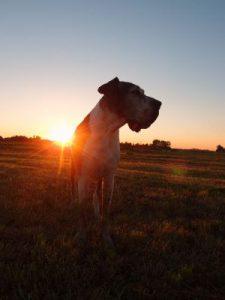Lillie bei Sonnenuntergang