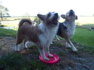 Hunde - Spiellaune
