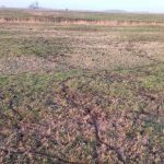 Mäuseplage auf der Weide